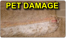 Pet Damage